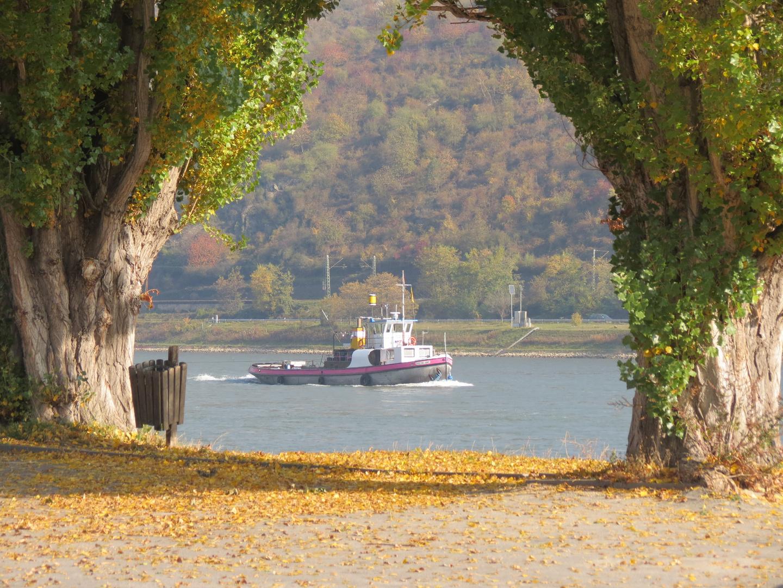 Goldener November am Rhein