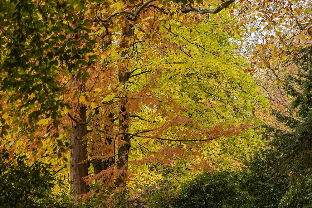 GOLDENER NOVEMBER im Kurpark Bad Homburg