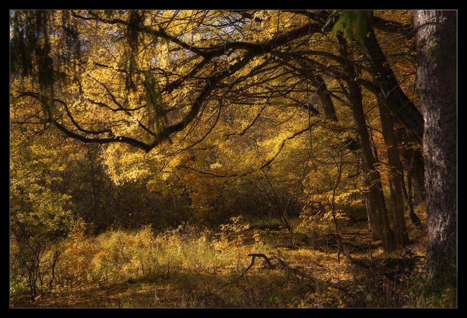 ...goldener Oktober 2...