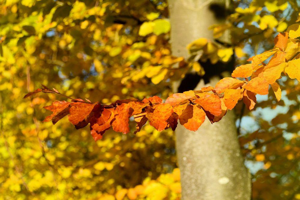 goldener Oktober-3-