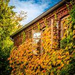 > goldener Oktober <