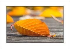 Goldener Oktober - die Blätter ...