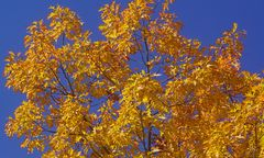 Goldener Oktober - Unterwegs mit dem Mountainbike