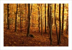 Goldener Oktoberwald