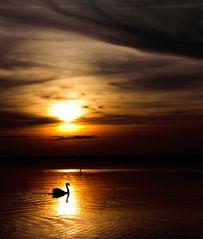 goldener Schwanensee