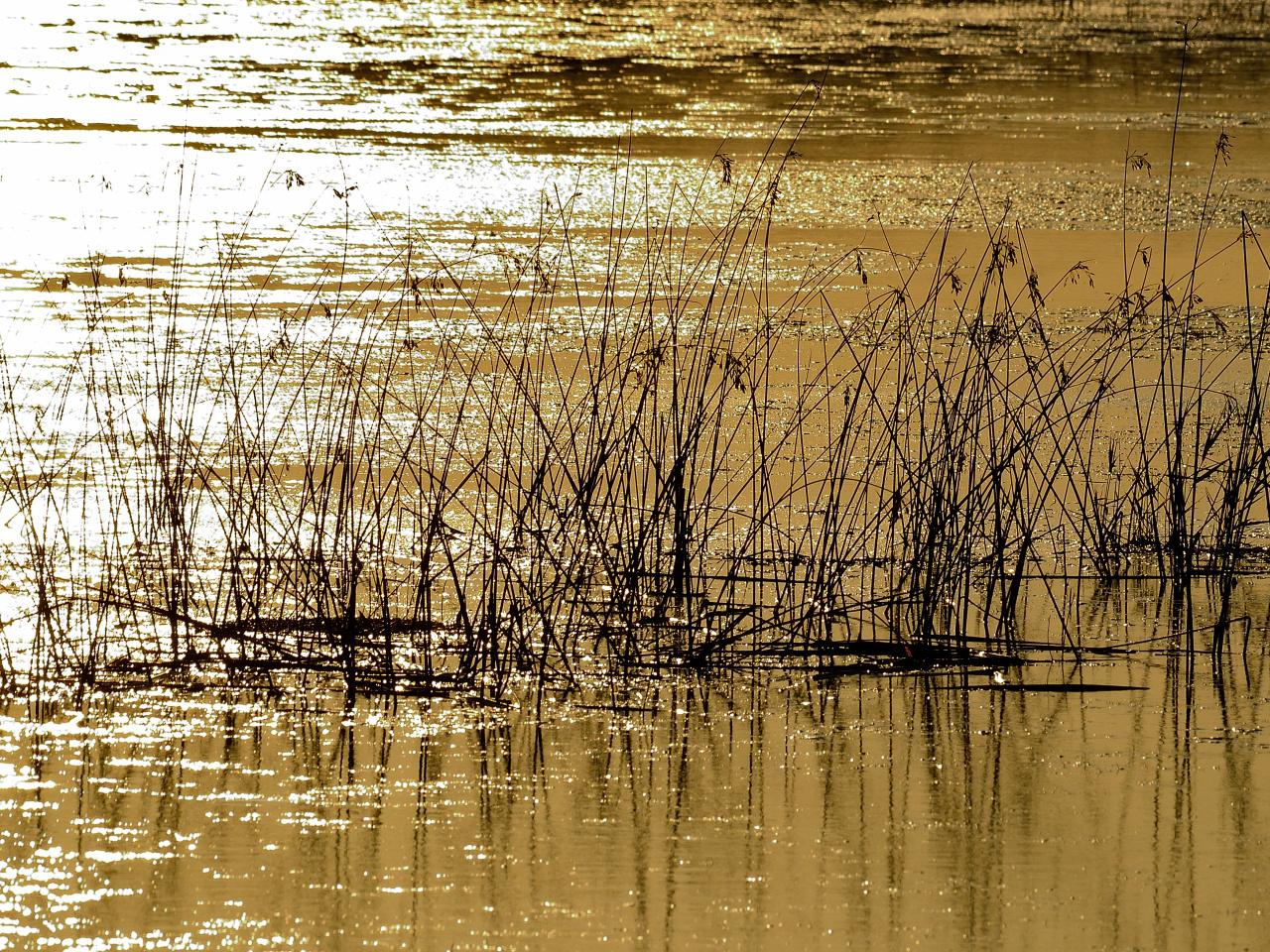 Goldener See, golden lake,  lago dorado