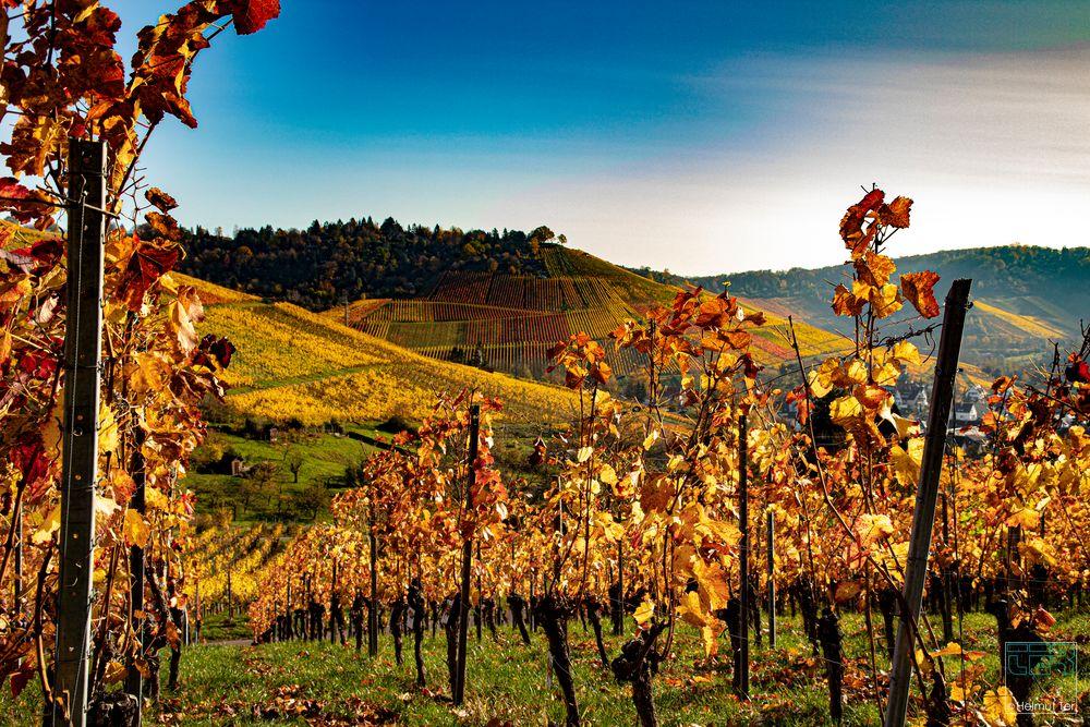 Goldener Wein