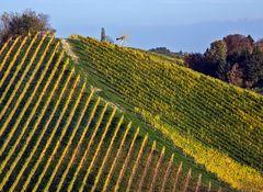 Goldener Weinberg in der Südsteiermark!