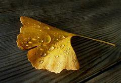 Goldenes Ginkgoblatt
