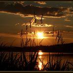 Goldenes Licht
