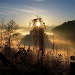 Goldenes Nebelmeer