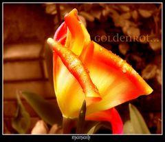 goldenrot