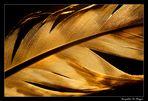 Goldfeder