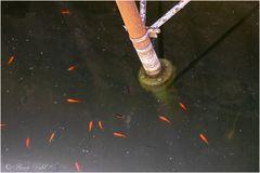 Goldfische unter der Brücke