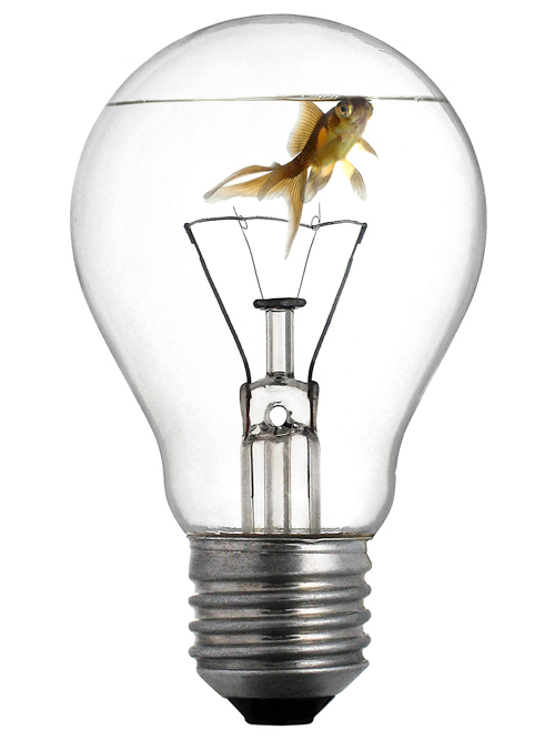 Goldfish's light