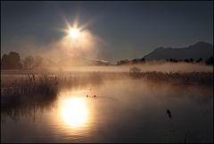 ~ Goldiger Wintermorgen II ~