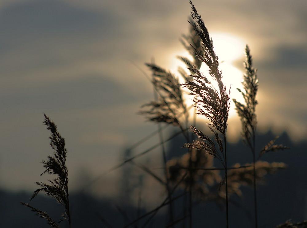 goldiges Licht