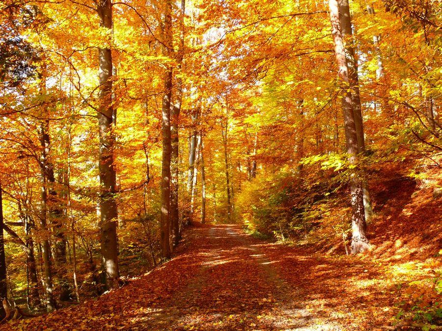 Goldrausch im Wald
