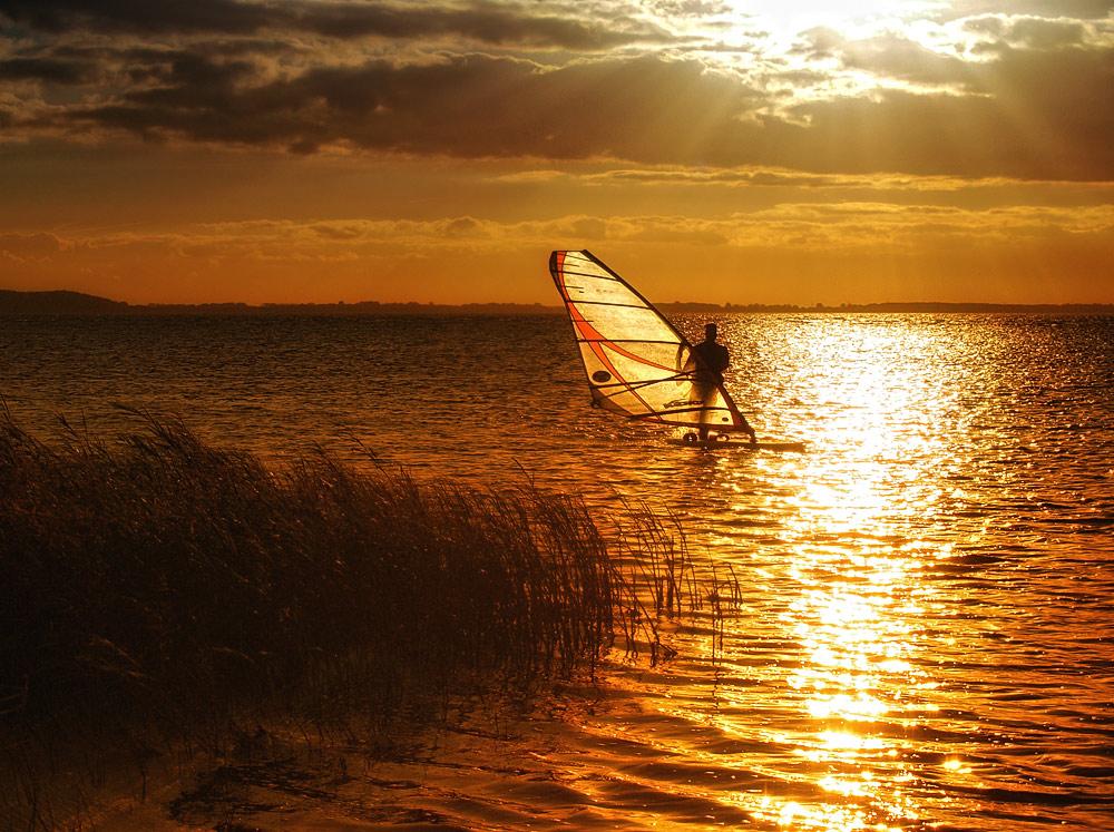 Goldsurfer