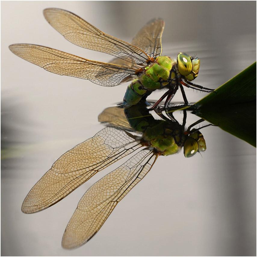 goldwings...