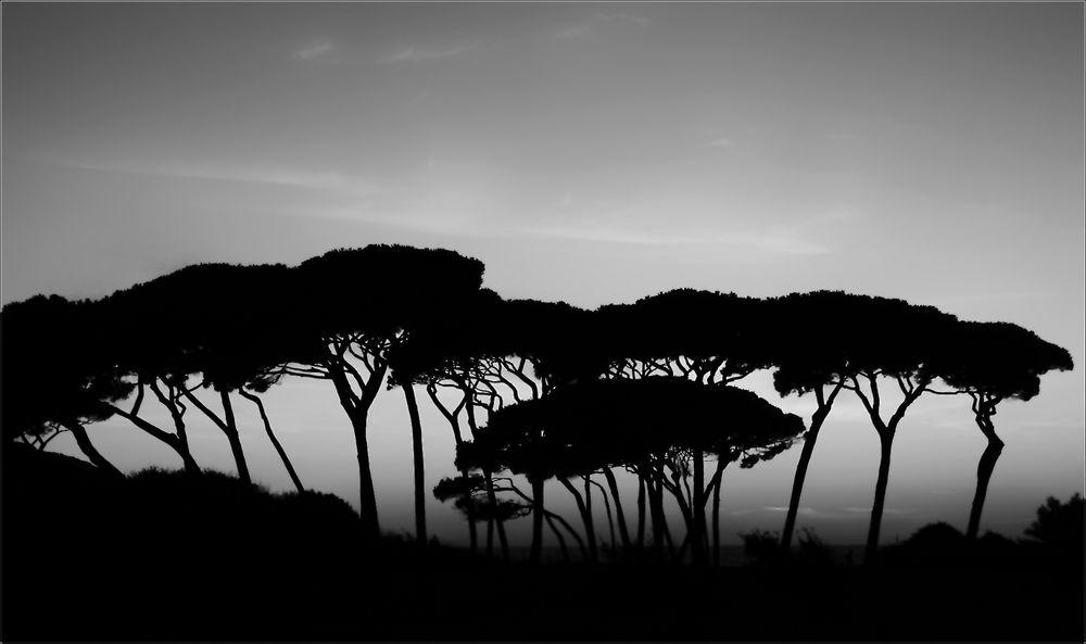 Golfo di Baratti . . . Toscana