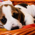 Gomatographie - Dog chilling