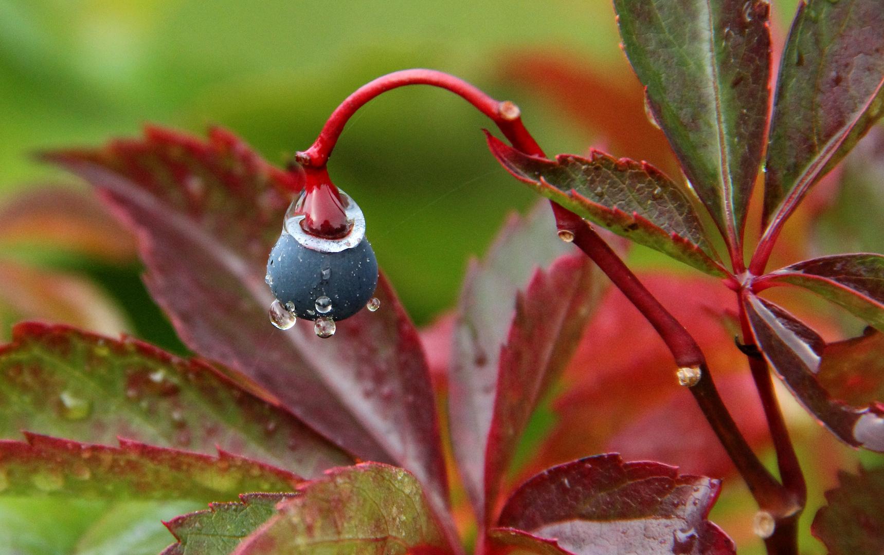 good morning little berry
