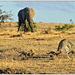 Good news aus der Masai Mara