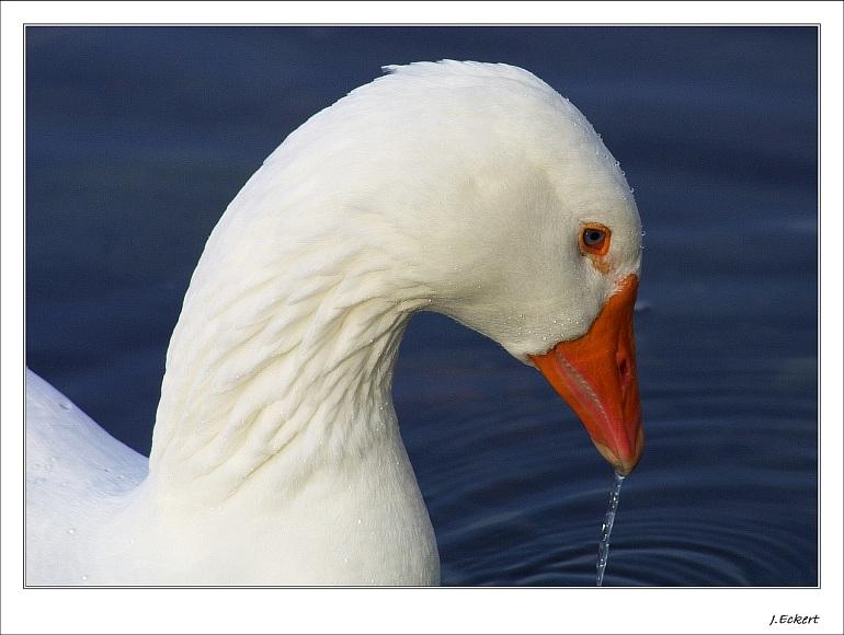 """Goose #2 (""""undicht"""")"""