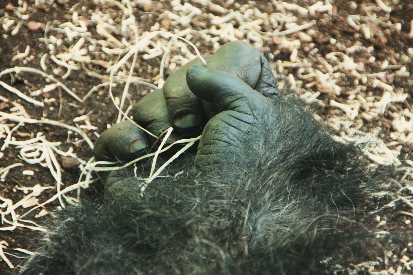Gorilla Faust