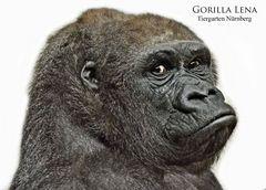 Gorilla LENA