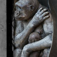 Gorilla mit Nachwuchs im Zoo in Calgary