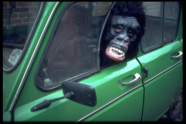 Gorilla ohne Führerschein