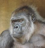+++Gorilla-Senior+++