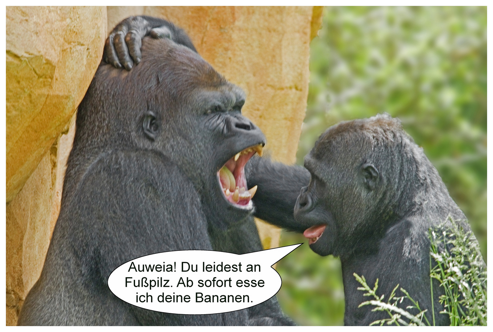 gorilla stellt diagnose