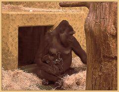 Gorillamama mit Baby