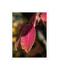 GosLarsche Herbstimpressionen