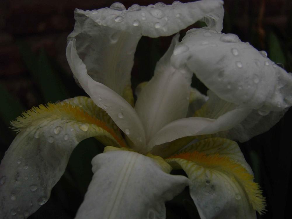 gotas de lluvia II