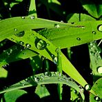 gotas sobre la hierba