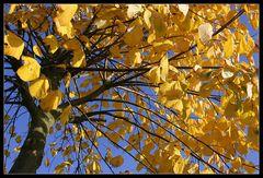 Gott sei Dank für diesen wunderbaren Oktober 2005