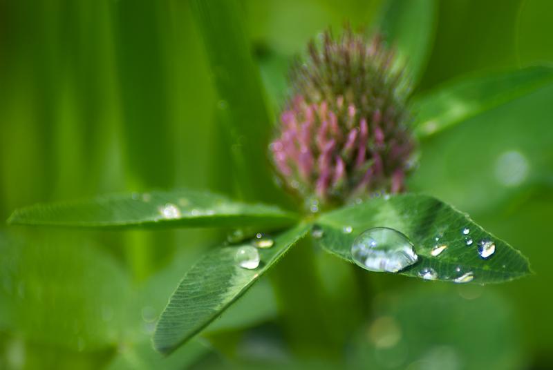 goutte de pluie