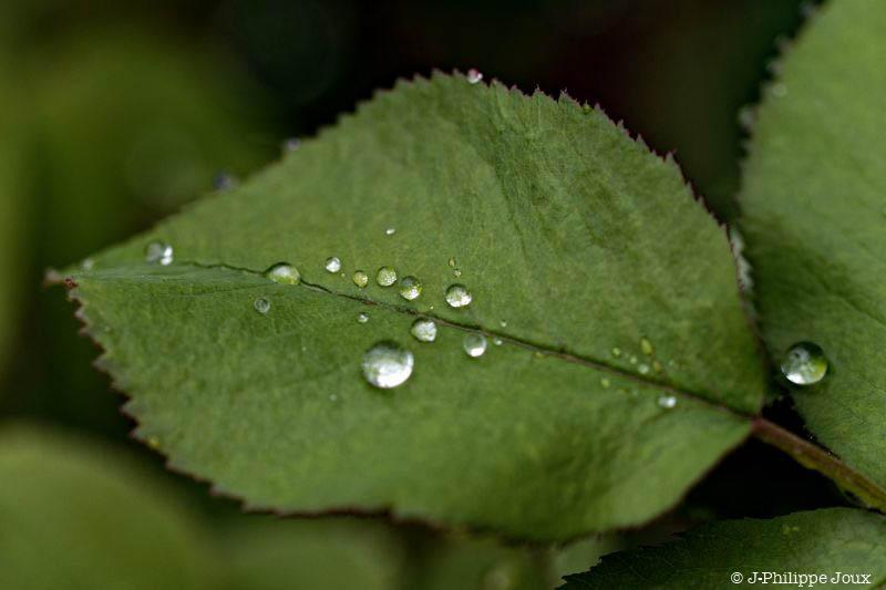 Goutte de pluie -