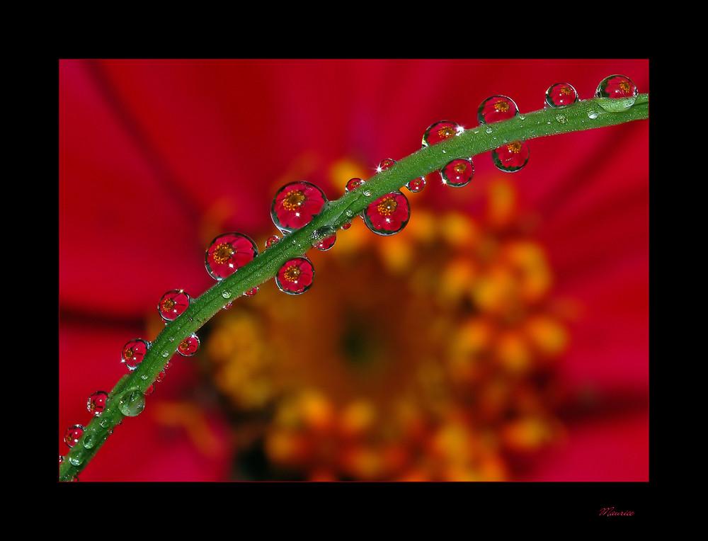 gouttes des fleurs