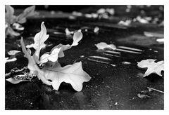 Grabplatte im Herbst