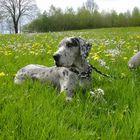 Grace im Blumenmeer