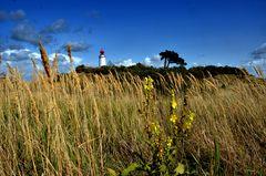 Gräser am Leuchtturm