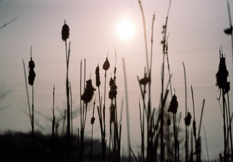 Graeser am Teich