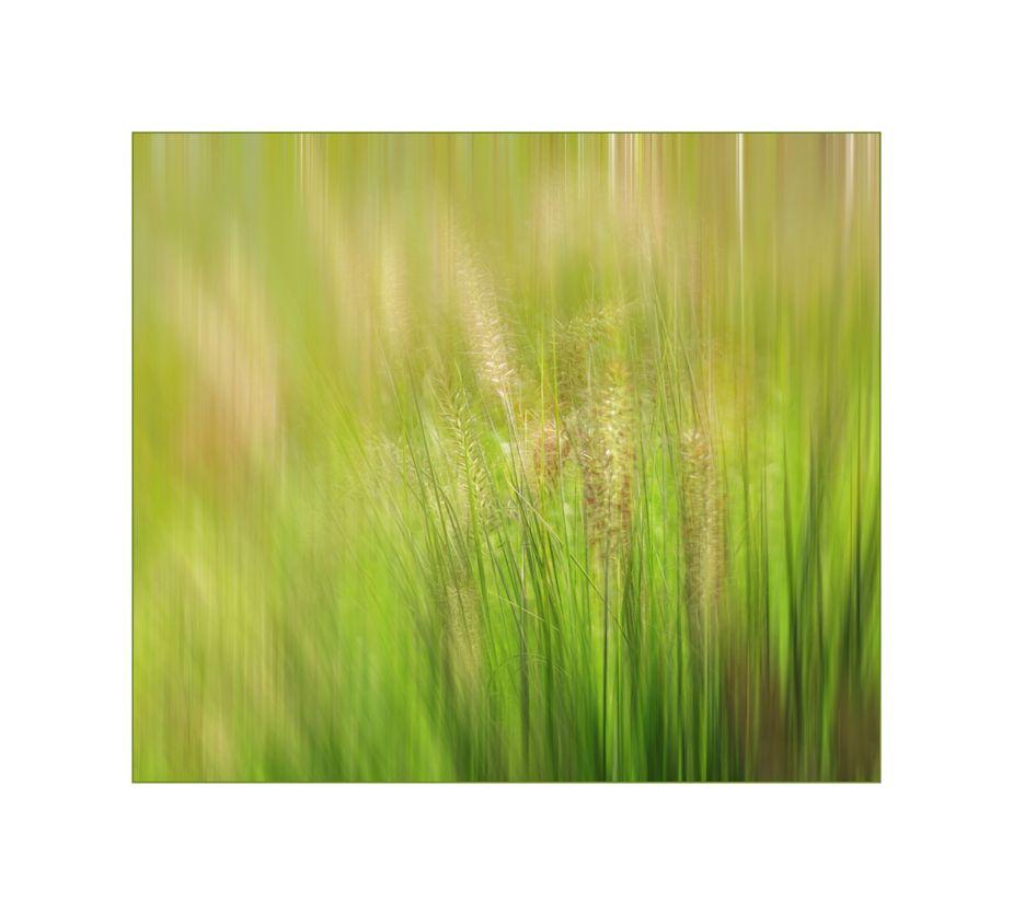 Gräser…