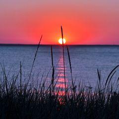 Gräser im Abendlicht - Insel Rügen