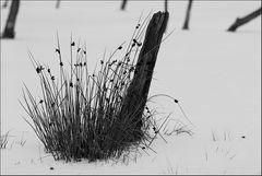 Gräser im Eis
